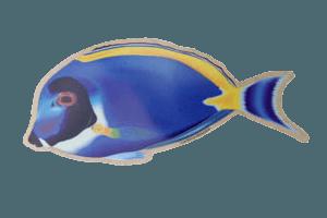 Aufkleber Doktorfisch