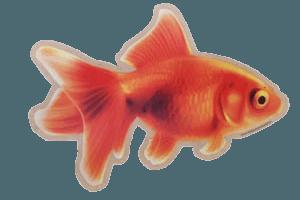 Aufkleber Goldfisch